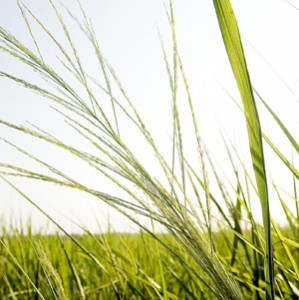 grassenergy